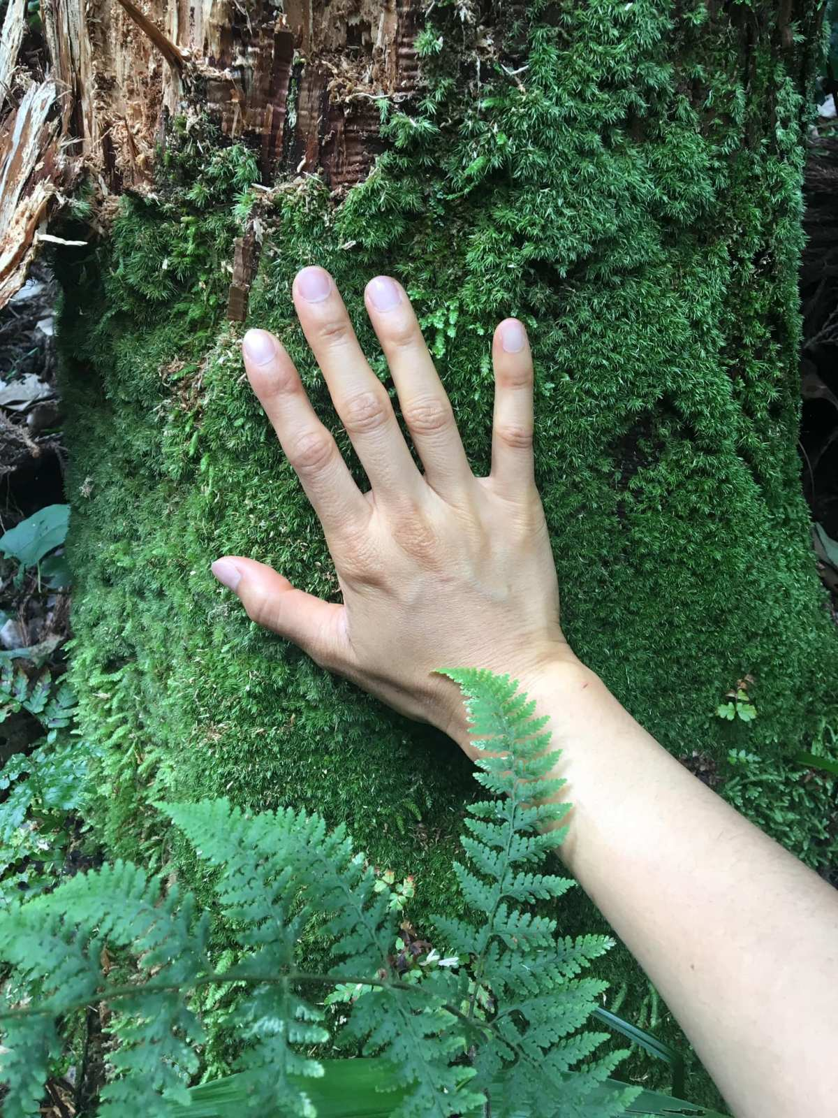 Forest Bathing Certification Training a hand touching a tree covered in green moss