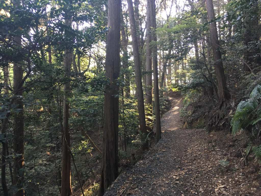 Planning forest bathing in Kyoto