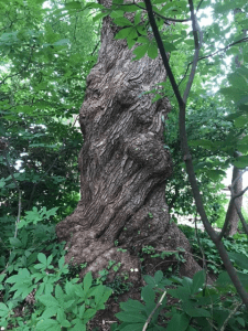 Forest Bathing Connecticut