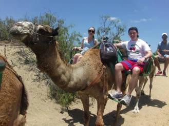 Camel Trekking through the Sand Dunes, Maspalomas