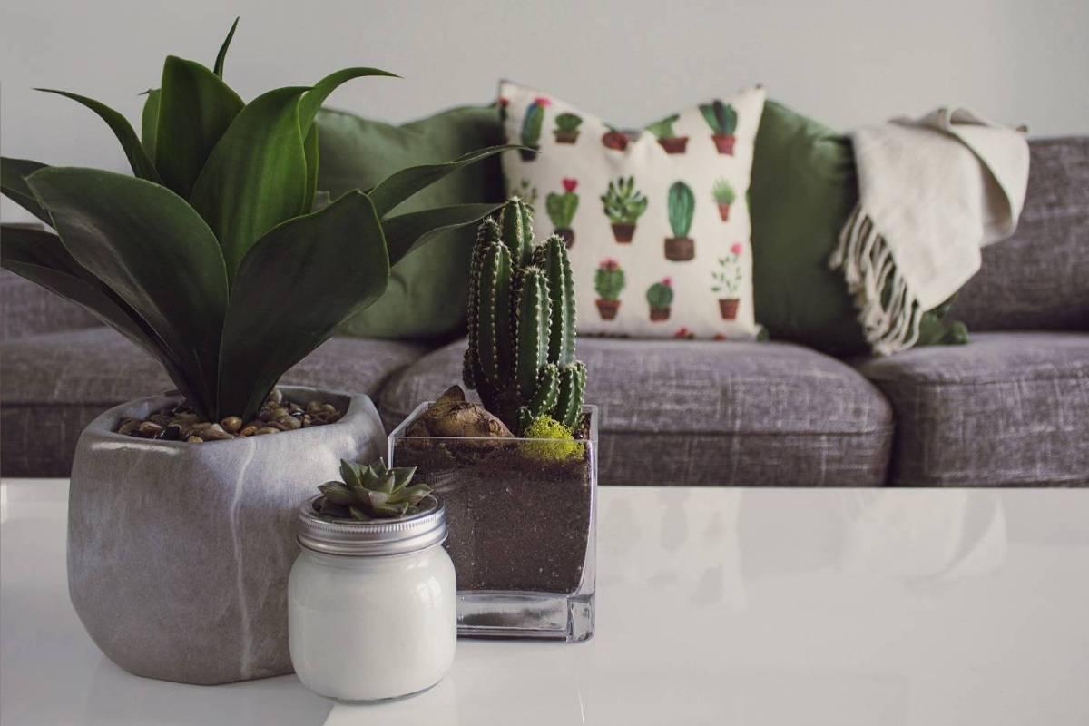 Plantas de cactus en la mesa de café