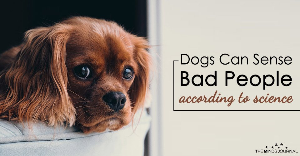 Dogs Can Sense Bad People According To Science Jpg