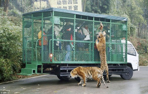 zoo in china