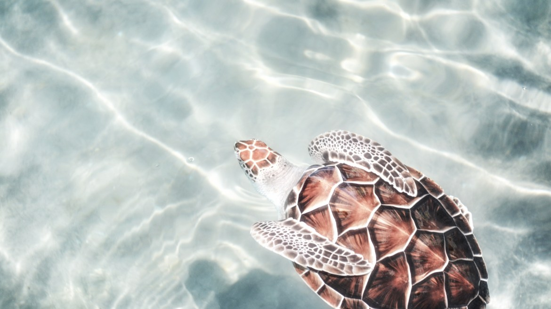 Slow Living | Viver a Vida como uma Tartaruga