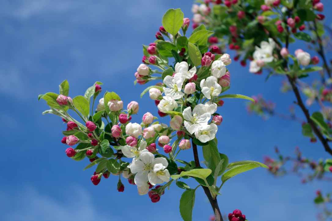 white flowers on black tree branch under sky during daytime