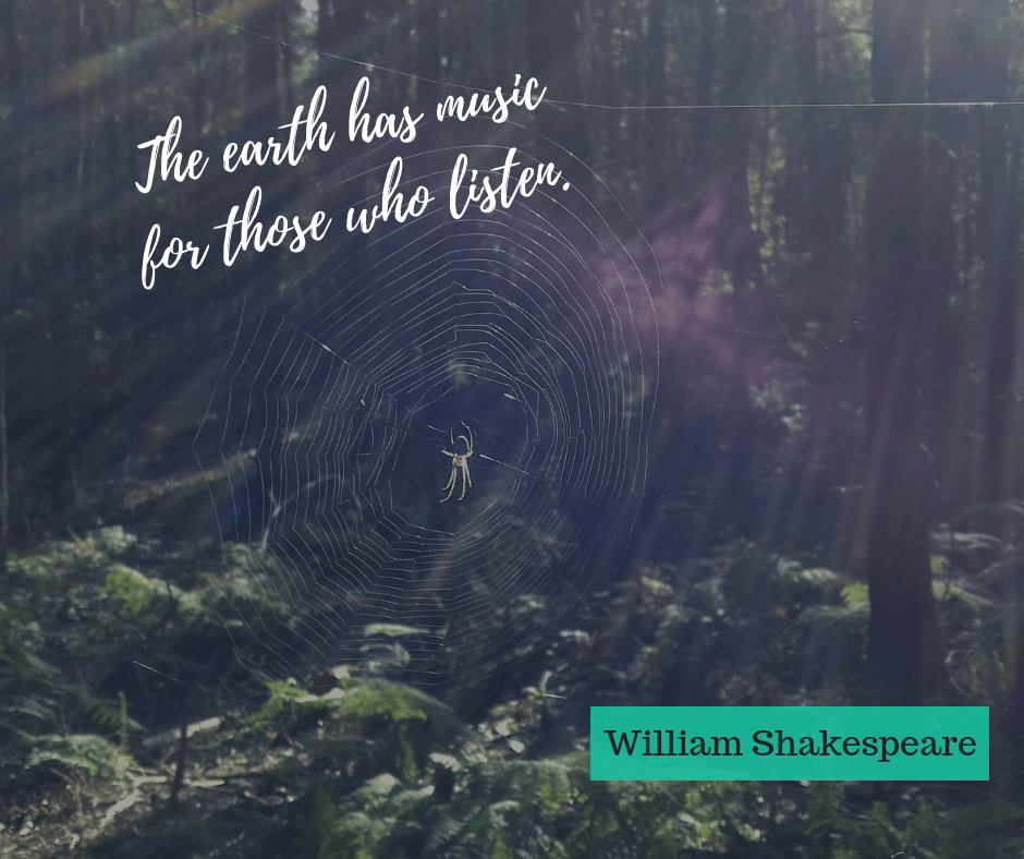 spider in a web, shakespeare