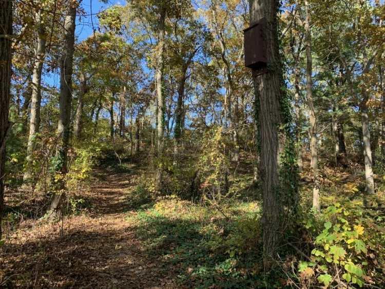 a bat house at Plainview Park Trail