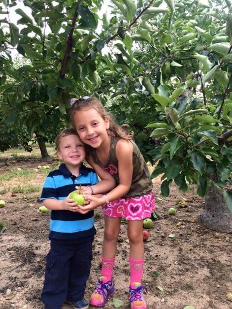 Apple Picking 2015 - Lewin Farm, Wading River