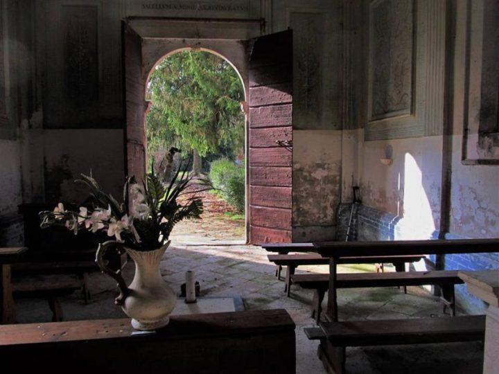 il palazzo bruciato - the minutes fly - web magazine - fiori penombra