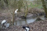 Lady crossing her paws for a clean jump over the stream