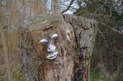 nice to meet a friendly tree:-)