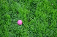 surprisingly how hard it is to find a red ball in the grass