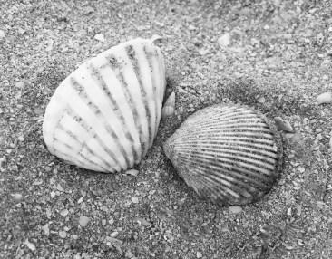 shells-1