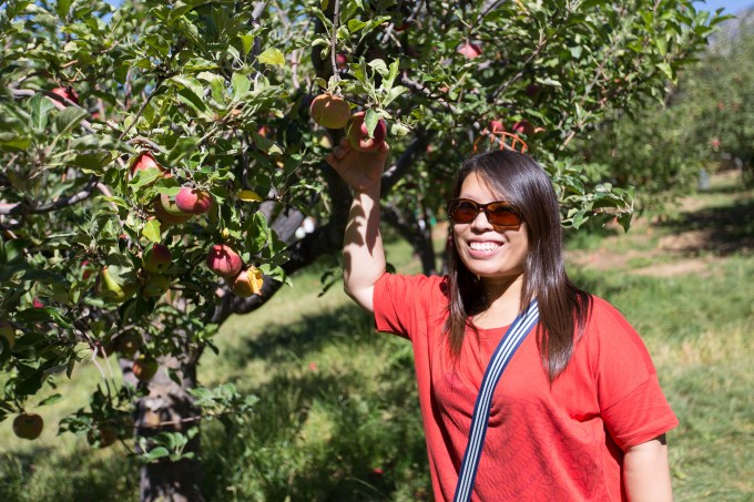 Apple Picking | The Missing Lokness