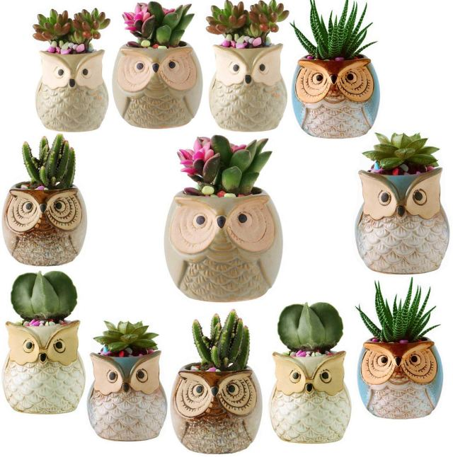 Woman wants nothing - Owl planters succulents