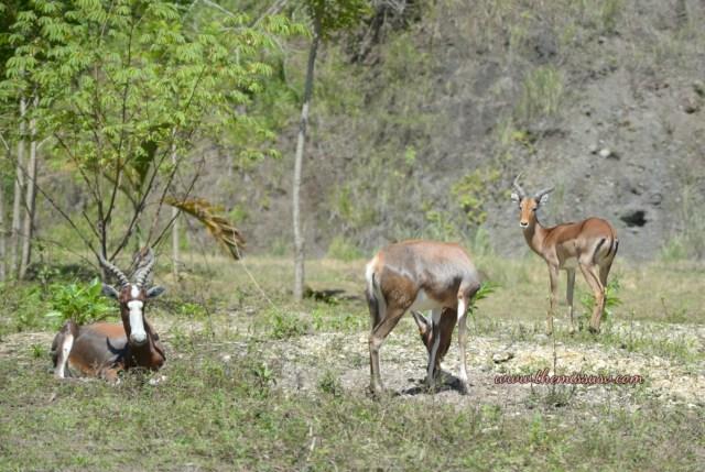 Cebu Safari and Adventure Park - African Savannah Adventure Ride