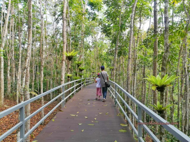 Cebu Safari and Adventure Park - Canopy Walk