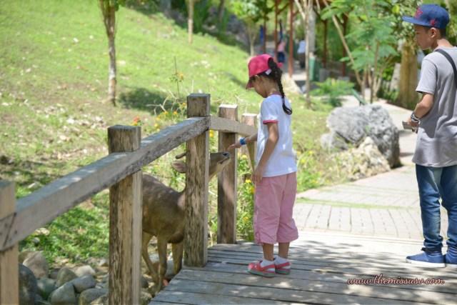 Cebu Safari and Adventure Park - Deer