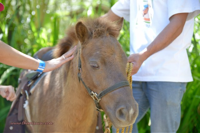Cebu Safari and Adventure Park - Little Pony