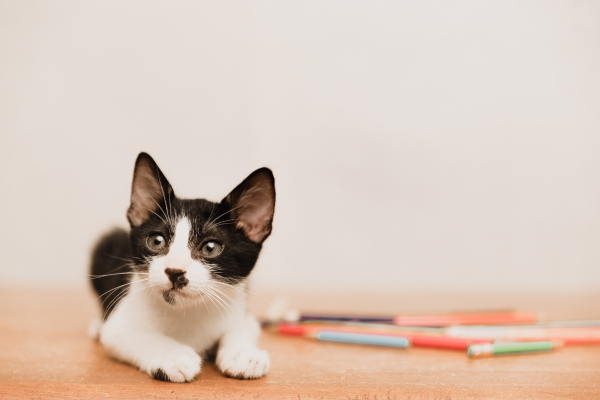 What to prepare before you adopt a cat