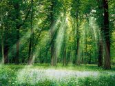 photos-of-a-forse-magical-forest