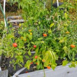 Gardening with Kids: Plan it Out, Write it Down
