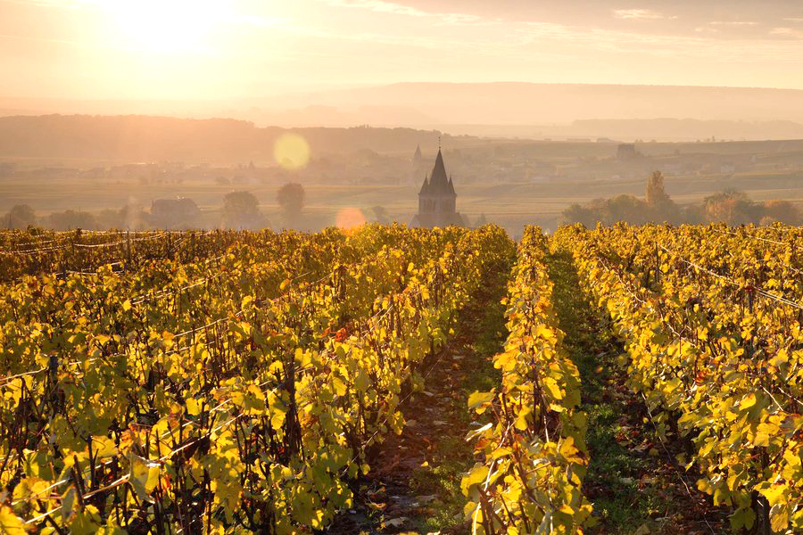 champagne-autumn-vineyards-france-CHAMPAGNE1118.jpg