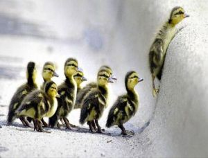 Duck-in-the-Lead