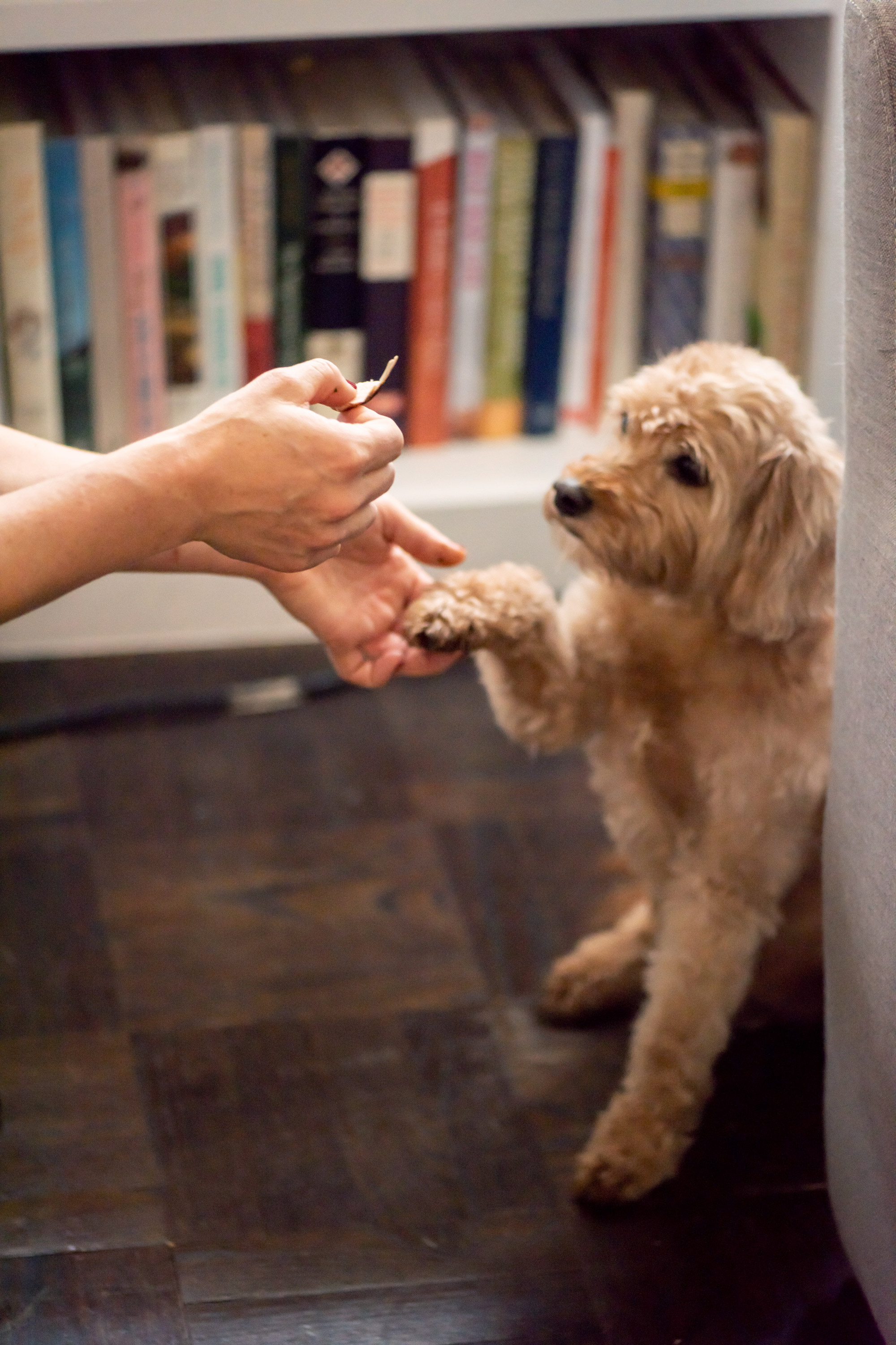 How to Give a Dog a Pill. Some dogs happily gobble up pills in a little smear of peanut butter. Not ours. You only need one or two of these little tricks to make pill taking time for your pup—and you—easier.