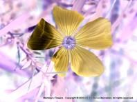 Monday Flower Art 4
