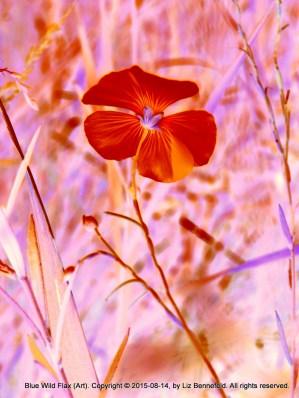 Wild Flax in Shades of Orange