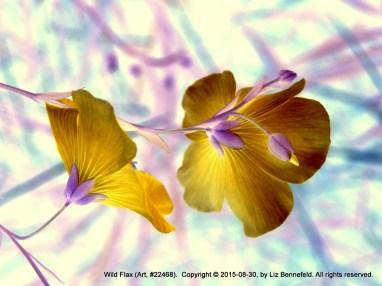 Wild Flax no. 22468