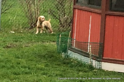 Thaddeus, Looking for the Rabbits