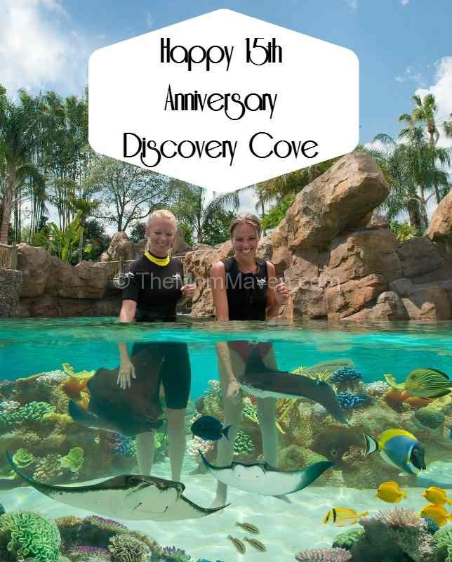 Happy 15th Anniversary Discovery Cove from The Mom Maven