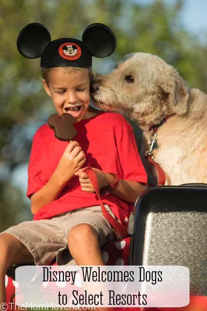 The welcome mutt is out! Walt Disney World now welcomes dogs at select resorts.