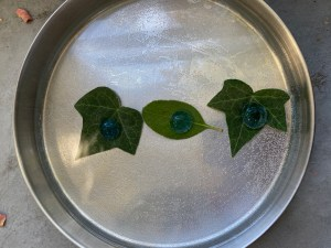 Photosynthesis STEM experiment