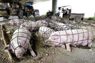 Animal Abuse - Human Cruelty - Copy