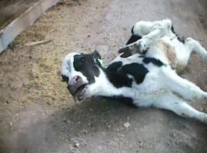 e6-cattle-company1