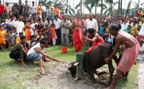 Indian Hindu devotees watch as a buffalo