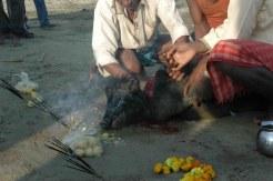 Piglet sacrifice at Gadhimai4