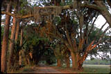 Swamp Woods Road