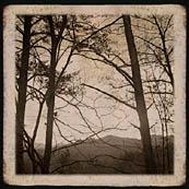 Appalachian Woods