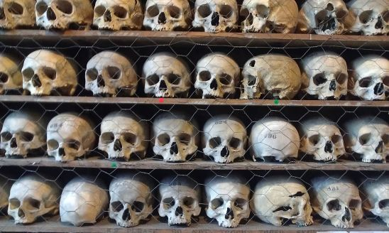 Human Skulls On Shelf