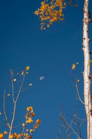 Fall In Wyoming, Saratoga, Moon and Aspens