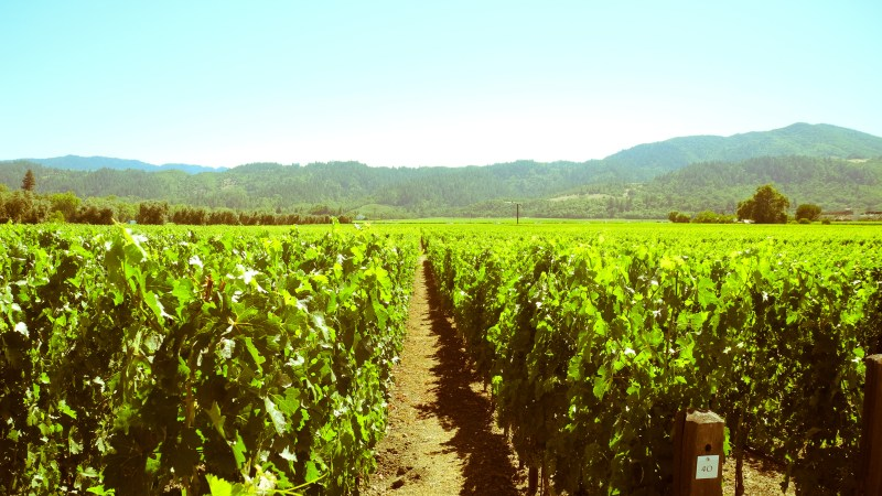Photo Essay Of Vineyards In Napa Valley