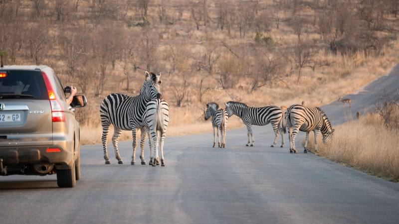 A 3-Day Self-Drive Itinerary in Kruger National Park