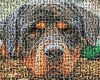 cute Dog photo mosaic made from 100 personal dog pictures
