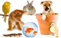 Assorted-Pets-domestic-animals-4741648-871-551