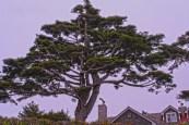 hdr-tree-flat