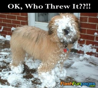 dog-hit-with-snowball